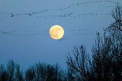 Moon with Flock of Geese stock photo
