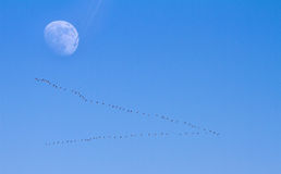 Moon fly by Royalty Free Stock Image