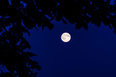 Moon in forest Stock Images
