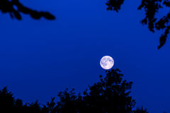 Moon in forest Stock Photos