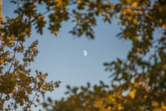 The moon in a frame of leaves, shallow focus Stock Photos