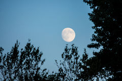 Moon Framed by Trees Royalty Free Stock Photos