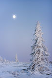 The Moon and the frozen tree. A beautiful winter scenery in which Moon shines so bright Stock Photos