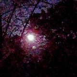 Moon glow. Autumn moon through trees Royalty Free Stock Images