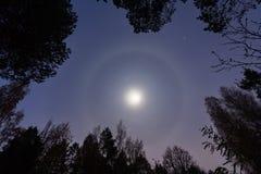 Moon halo with trees royalty free stock photo