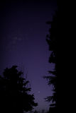 Moon. The moon is hiding behind the trees Royalty Free Stock Images