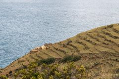 Moon Island slope. Terraced fields and farm buildings on slope of Moon Island at lake Titicaca in Bolivia stock photos