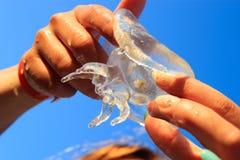 Moon jellyfish Stock Image