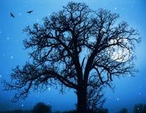 Moon.jpg Royalty Free Stock Image