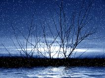 Moon light. Tree in snow Stock Photos