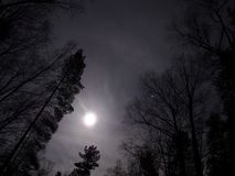 Moon light over night forest stock photography