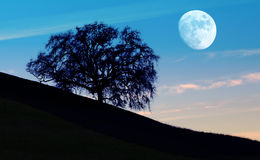 Moon Light Royalty Free Stock Photography