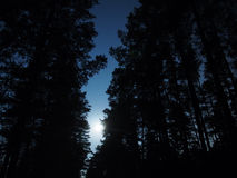 Moon in blue sky over night forest  Stock Photo