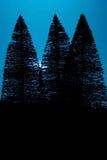 Moon Light Pine Trees Royalty Free Stock Photo