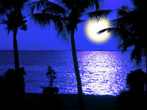 Moon light silhouette coconut tree in night. Moon light and silhouette coconut tree in night royalty free stock image