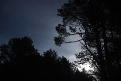 Moon light stars and blue clouds over night forest royalty free stock photo