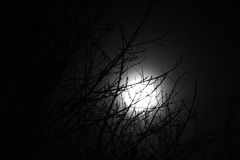 The moon lightning up the treetop Royalty Free Stock Image