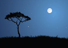 Moon lit Savanna Stock Photo