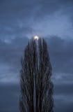 Moon mellan trees Royaltyfria Bilder