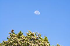 Moon during the mid morning Stock Photos