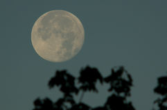 Moon in the morning sky Stock Images