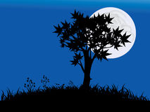Moon in the night. Silhouette of tree Stock Photos