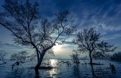 Moon night with asian fisherman work on mangrove forest royalty free stock photos