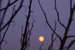 Moon in the night Stock Photography