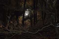 Moon in the night. royalty free stock images