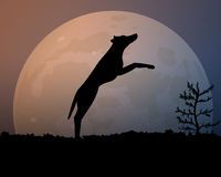 Moon in the night. Silhouette black jumping dog. Royalty Free Stock Image
