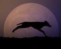 Moon in the night. Silhouette black wild dog. Stock Photo