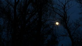 Moon night. Night  moon trees beautiful landscape silhouettes of branches stock video