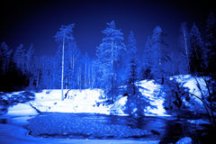 Moon night in winter forest  Royalty Free Stock Photos