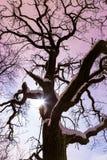 Moon o brilho através da árvore grande do conto de fadas na noite imagem de stock royalty free