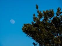 Moon och tree royaltyfri bild