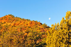 Moon over autumn trees Stock Images