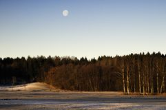 Moon over birch forest Royalty Free Stock Photo