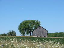 Moon over Farm in daytime. Barn in field with wild flowers trees and blue sky and moon overhead Stock Photography