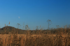 Moon over field. In Tennessee Stock Photography