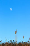 Moon over field. In Tennessee Royalty Free Stock Photo