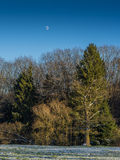 Moon over the Forest. The moon on a cold winter morning over a forest Royalty Free Stock Photos