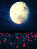 Moon over Grass Field. Big stylized moon in the night sky over grass field Royalty Free Stock Images