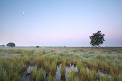 Moon over marsh at dawn Stock Photo