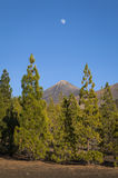 Moon over Mount Teide Royalty Free Stock Photography