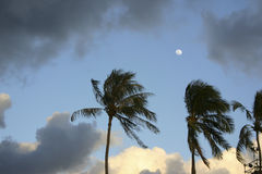 Moon over palms Royalty Free Stock Photo