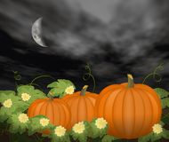 Moon Over Pumpkin Patch Stock Images
