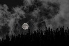 Moon over the tree lined ridgeline stock photo