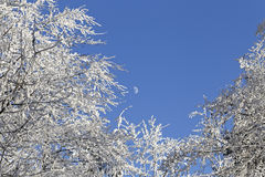 Moon over snow covered trees Royalty Free Stock Photos