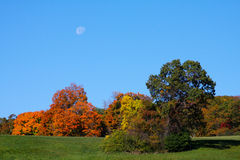 Moon Over Trees in Autumn. Moon over trees with their leaves changing in the fall Royalty Free Stock Photos