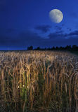 Moon. Over the wheat field Royalty Free Stock Images